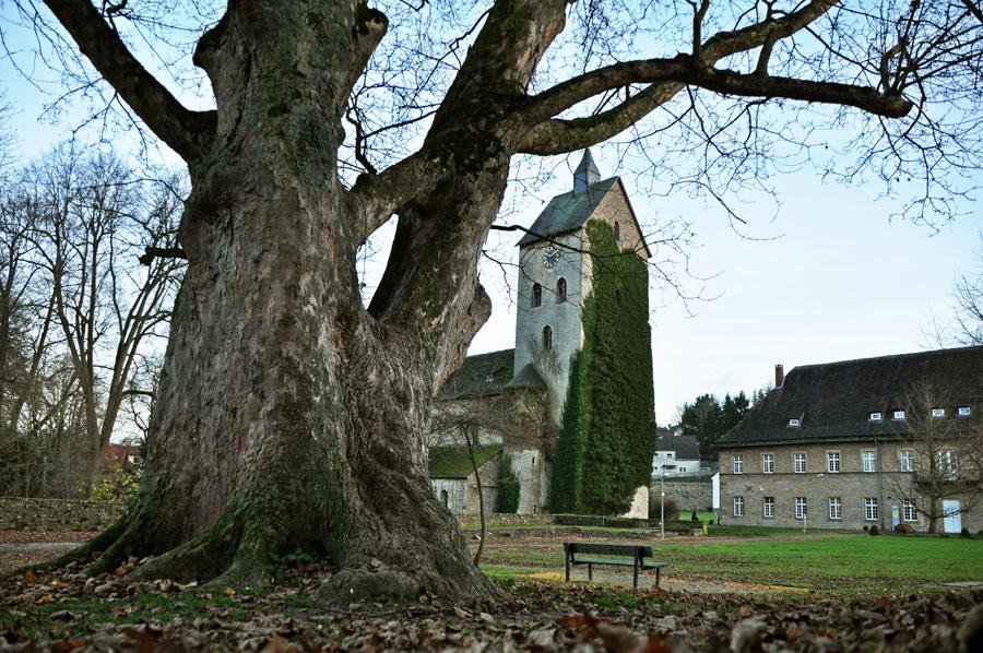 Bergahorn im Klostergarten von Gerden
