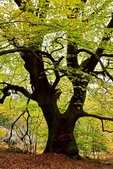 Alte Bäume und Wälder an den Externsteine