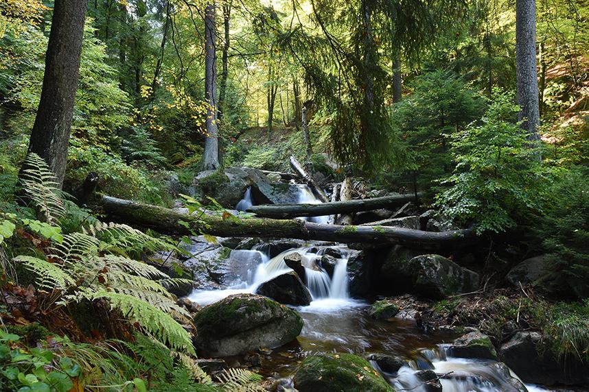 Wildwaseer Wildbach Ilse Harz